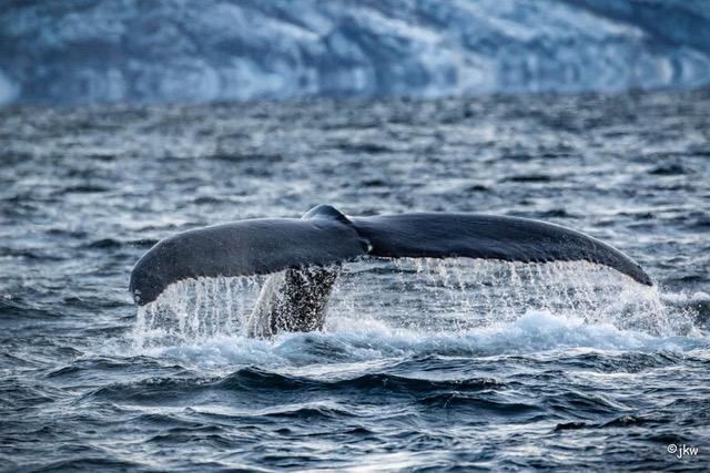 Orca-Tour Nord-Norwegen 2019